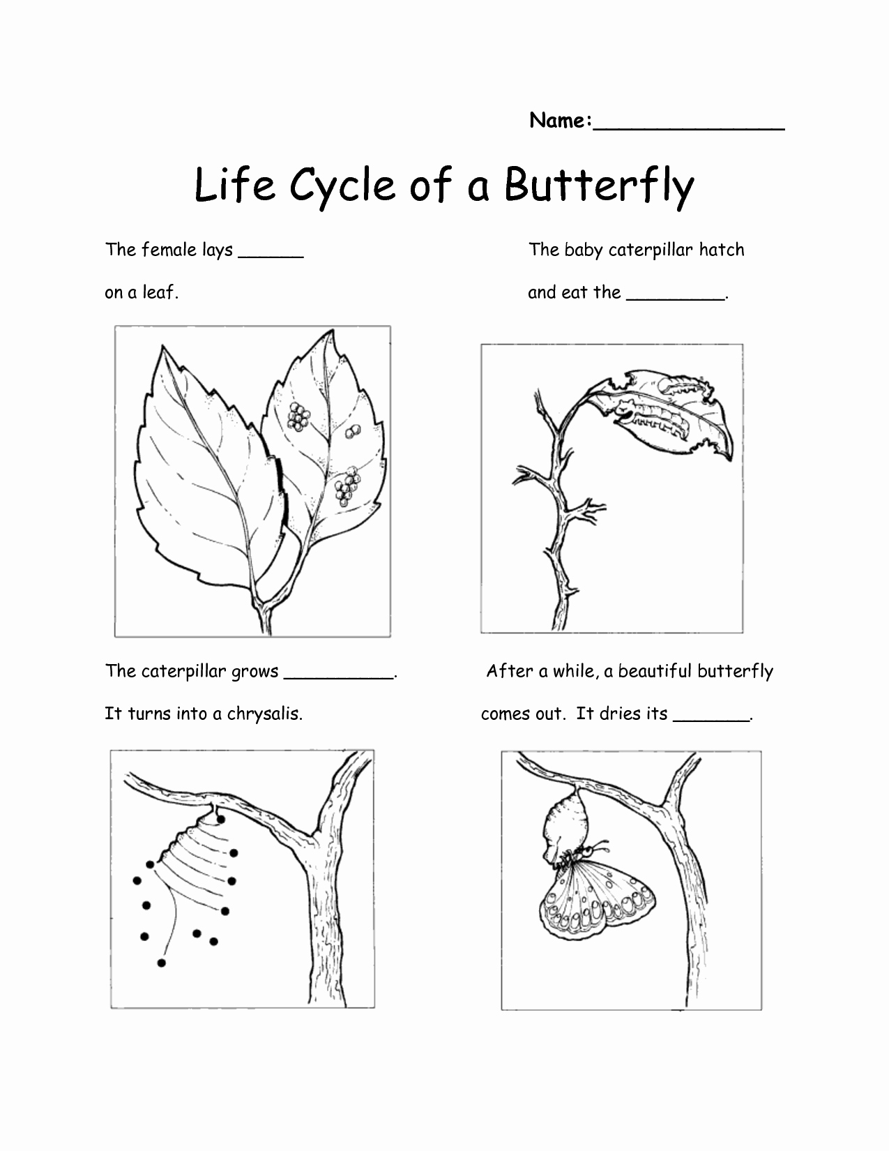 Butterfly Life Cycle Worksheet Luxury 12 Best Of Preschool butterfly Life Cycle A