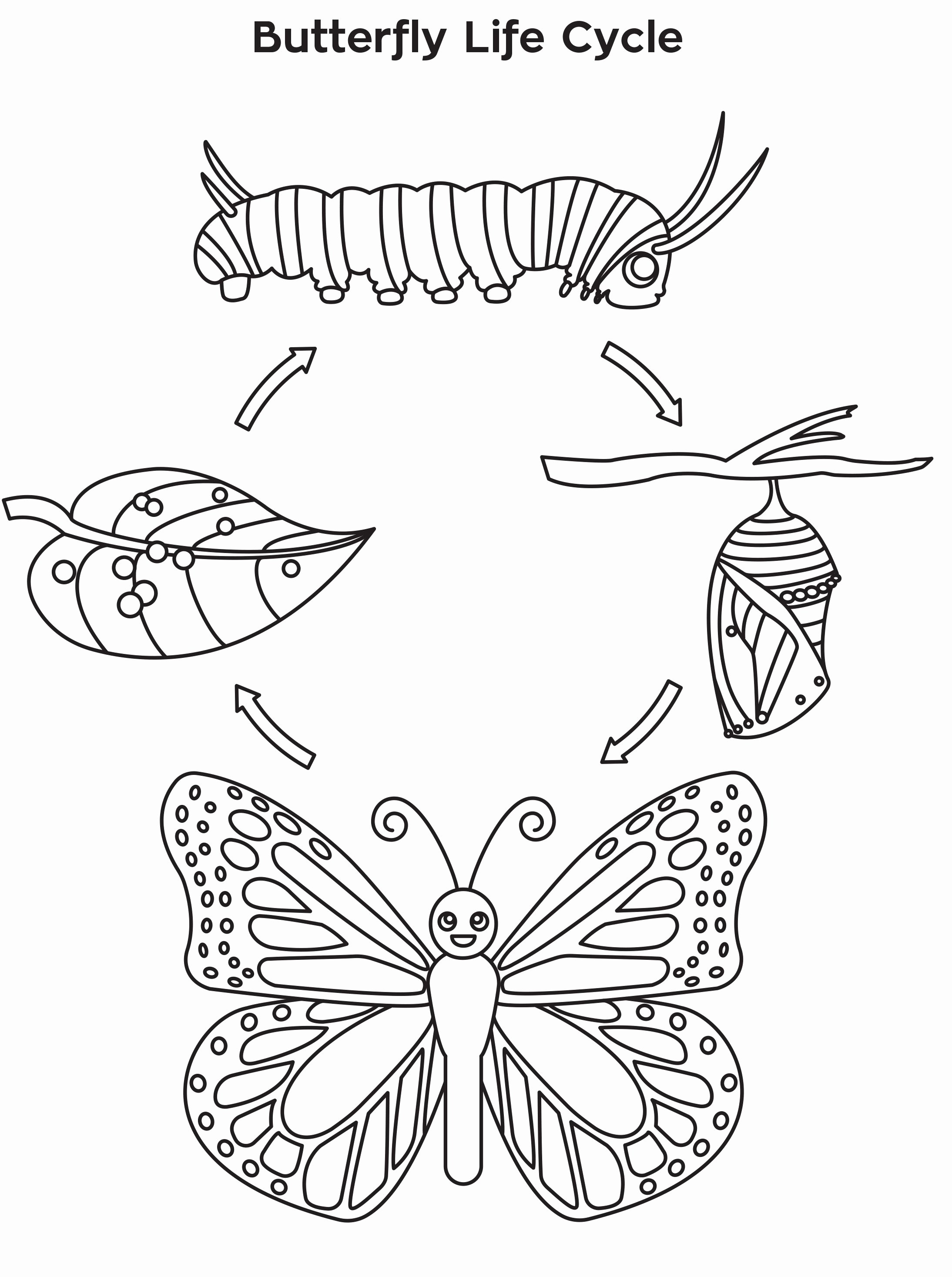Butterfly Life Cycle Worksheet Luxury Meeting 6 butterfly Life Cycle Coloring Sheet