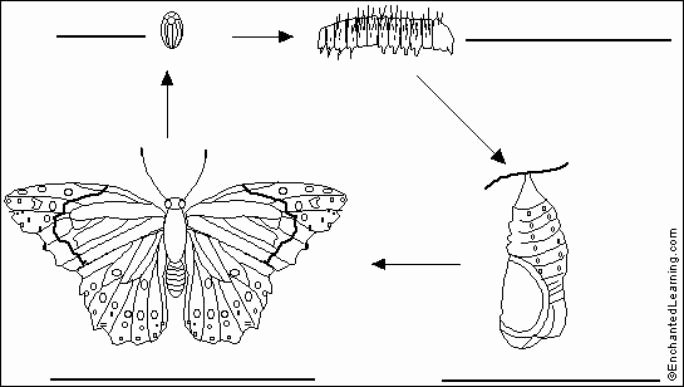 Butterfly Life Cycle Worksheet New 16th Annual butterfly Festival In Wimberley at the Emilyann