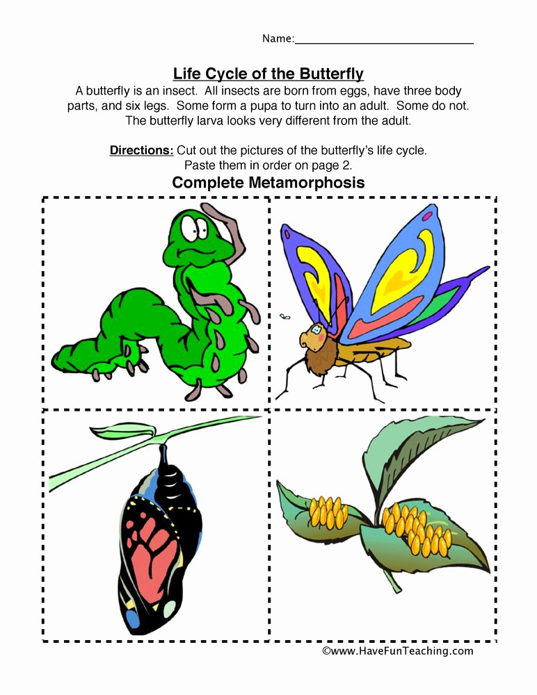 Butterfly Life Cycle Worksheet New Insect Worksheets
