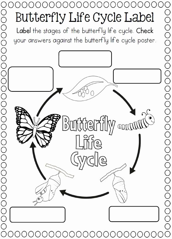 Butterfly Life Cycle Worksheet Unique 174 Best Images About Life Cycle Science Ideas On Pinterest
