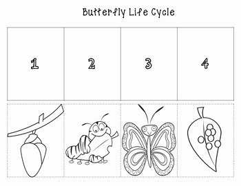 Butterfly Life Cycle Worksheet Unique butterfly Life Cycle Cut and Paste Color and B W by