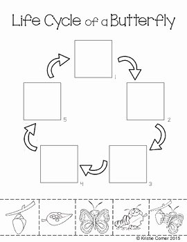 Butterfly Life Cycle Worksheet Unique butterfly Life Cycle Cut and Paste Worksheet by Lemons and