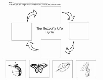 Butterfly Life Cycle Worksheet Unique butterfly Life Cycle Worksheet by the Artful Classroom
