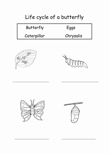 Butterfly Life Cycle Worksheet Unique Life Cycle Of A butterfly by sophiawg