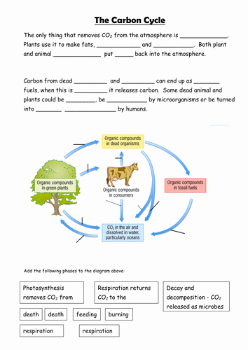 Carbon Cycle Diagram Worksheet Awesome Carbon Cycle by Sian Jones Teaching Resources Tes