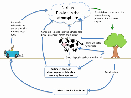 Carbon Cycle Diagram Worksheet Beautiful Carbon Cycle by Itegallagher Teaching Resources Tes