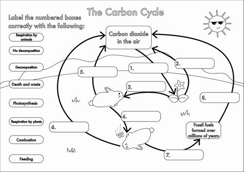 Carbon Cycle Diagram Worksheet Best Of Gcse Carbon Cycle Worksheets and A3 Wall Posters by
