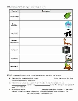 Carbon Cycle Diagram Worksheet Elegant the Carbon Cycle Review Worksheet Editable by Tangstar