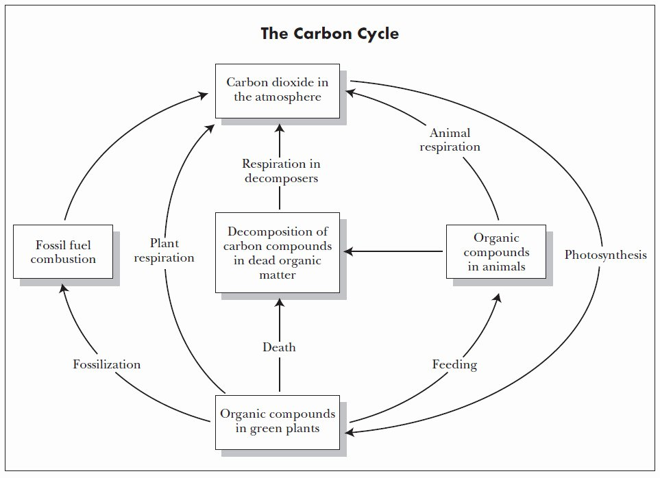 Carbon Cycle Diagram Worksheet Inspirational Carbon Cycle Worksheet