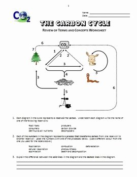 Carbon Cycle Diagram Worksheet Inspirational the Carbon Cycle Review Worksheet Editable by Tangstar