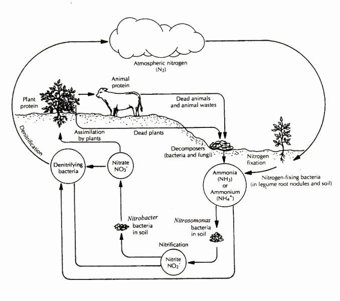 Carbon Cycle Diagram Worksheet Lovely Carbon Cycle Worksheet