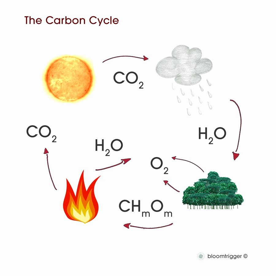 Carbon Cycle Diagram Worksheet Lovely Worksheet Carbon Cycle Diagram Worksheet Grass Fedjp
