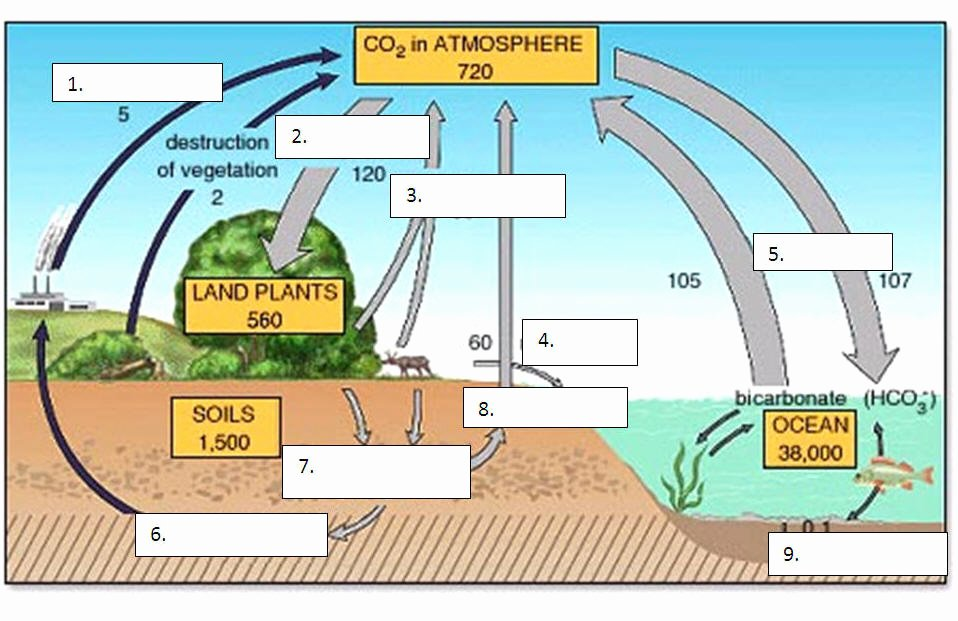 Carbon Cycle Diagram Worksheet New Physical Science Mr Durand S Classes