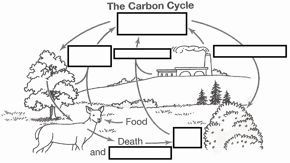 Carbon Cycle Diagram Worksheet New Wizer Free Interactive Carbon Cycle Biology Cycles