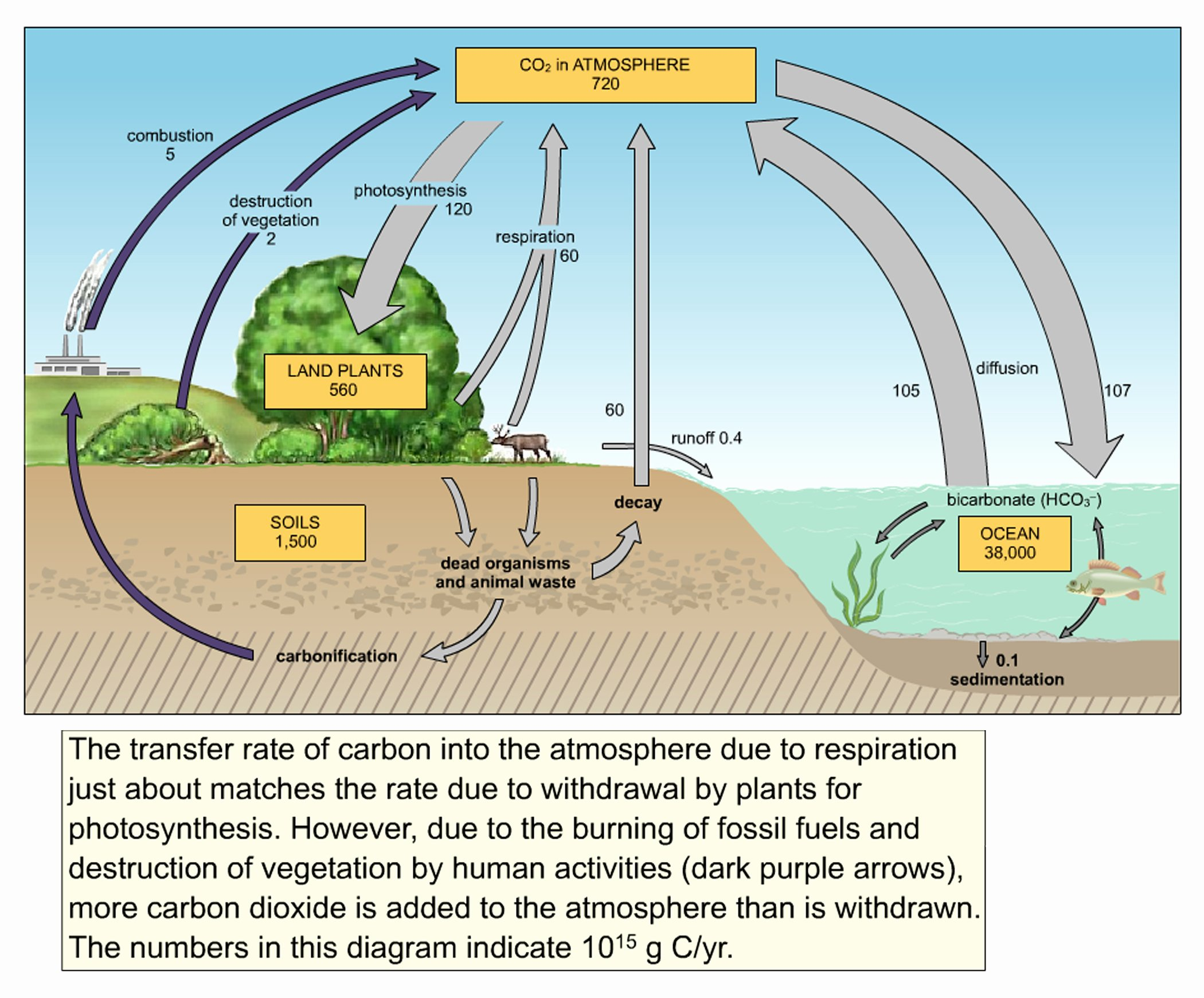 Carbon Cycle Diagram Worksheet Unique Cycle Diagram Driverlayer Search Engine
