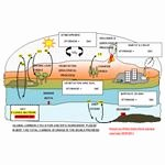 Carbon Cycle Diagram Worksheet Unique Explaining the Carbon Cycle with Diagrams and A Free