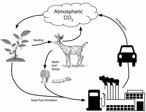 Carbon Cycle Diagram Worksheet Unique Pinterest • the World's Catalog Of Ideas