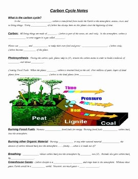 Carbon Cycle Worksheet Answers Fresh Carbon Cycle Notes by Scienceville