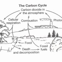 Carbon Cycle Worksheet Answers Fresh Reading Prehension Worksheets 7th Grade