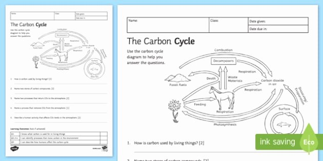 Carbon Cycle Worksheet Answers Lovely Carbon Cycle Worksheet