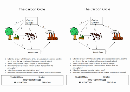 Carbon Cycle Worksheet Answers Luxury B1 5 4 Carbon Cycle by Nryates157 Teaching Resources Tes