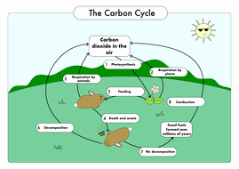 Carbon Cycle Worksheet Answers New Gcse Biology Carbon Cycle Worksheets and A3 Wall Posters