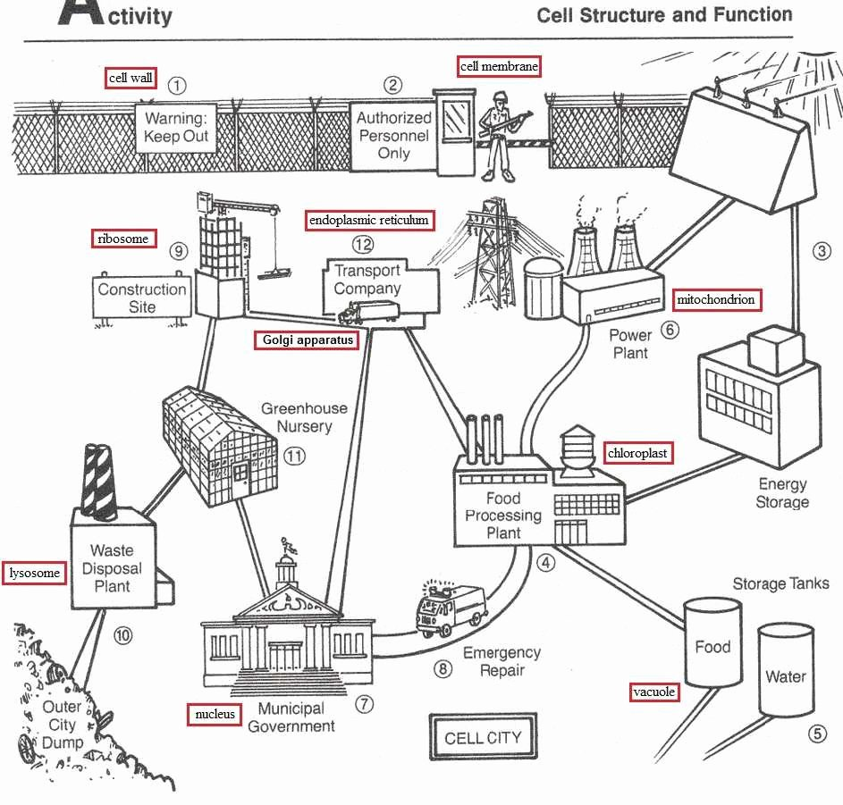 Cell City Analogy Worksheet Answers Awesome Worksheet Furthermore Cell City Analogy Worksheet Plant