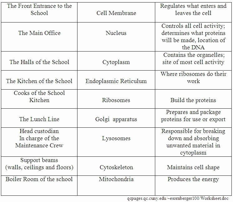 Cell City Analogy Worksheet Inspirational Cell City Analogy Worksheet