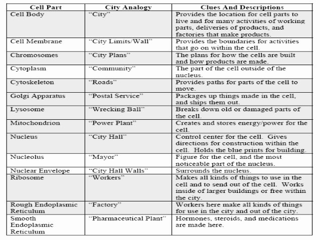 Cell City Analogy Worksheet New Design A Cell City
