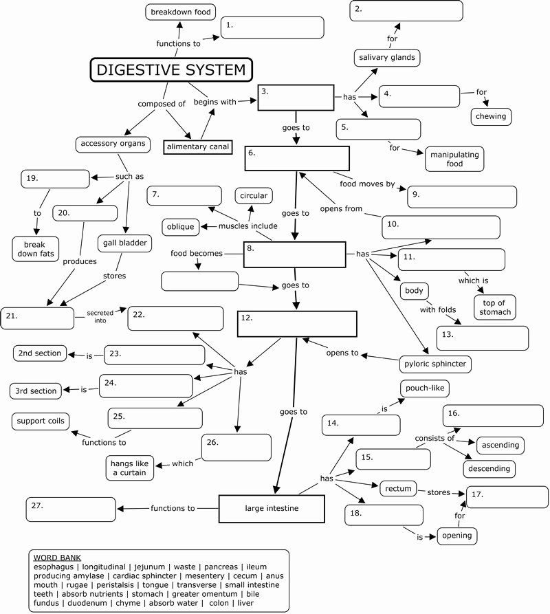 Cell Concept Map Worksheet Answers Beautiful 13 Best Of Biology Corner Worksheets Answer Key