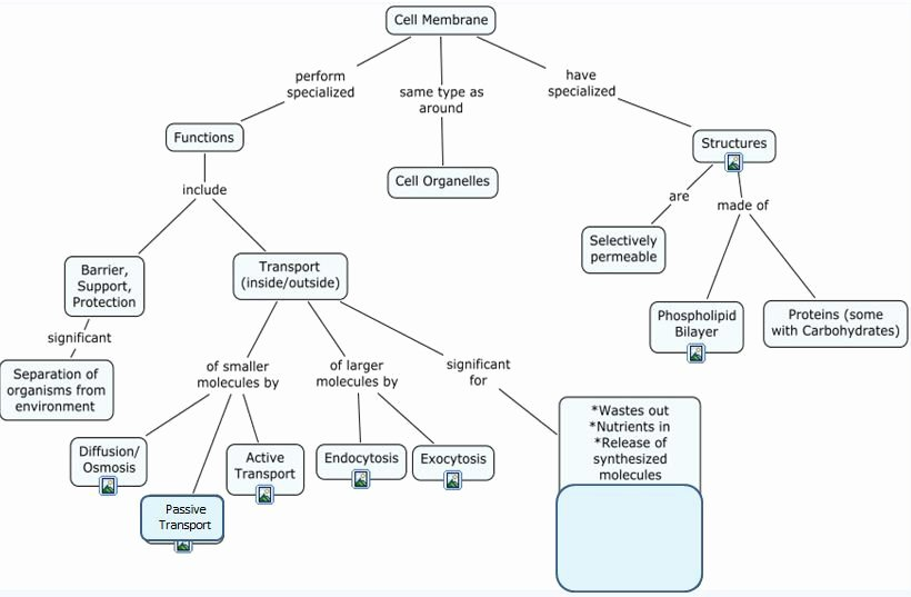 Cell Concept Map Worksheet Answers Elegant Archived 1st Semester 2012 Powered by Course Systems