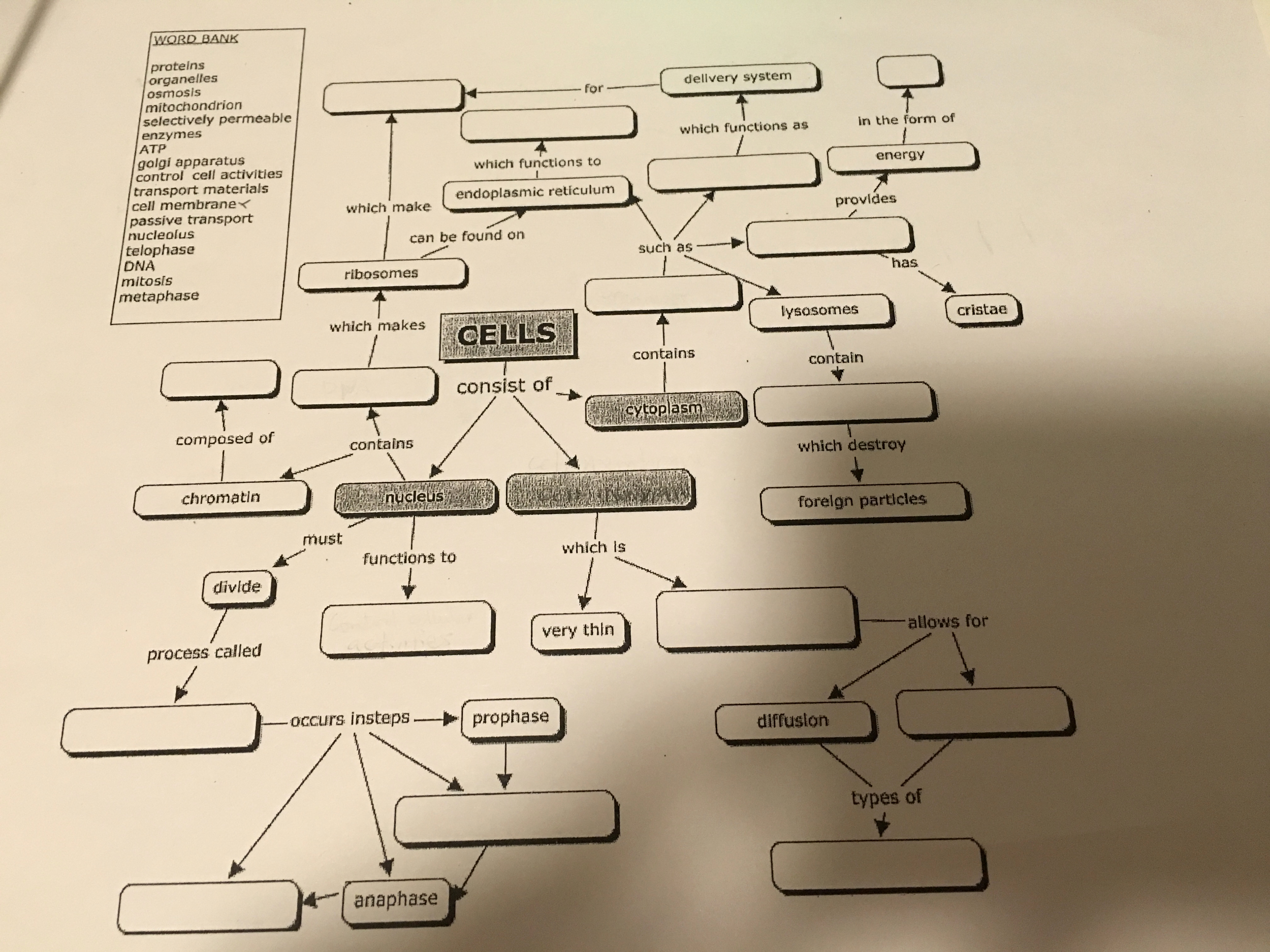 Cell Concept Map Worksheet Answers Fresh solved Word Bank Proteins organelles Osmosis Mitochondrio