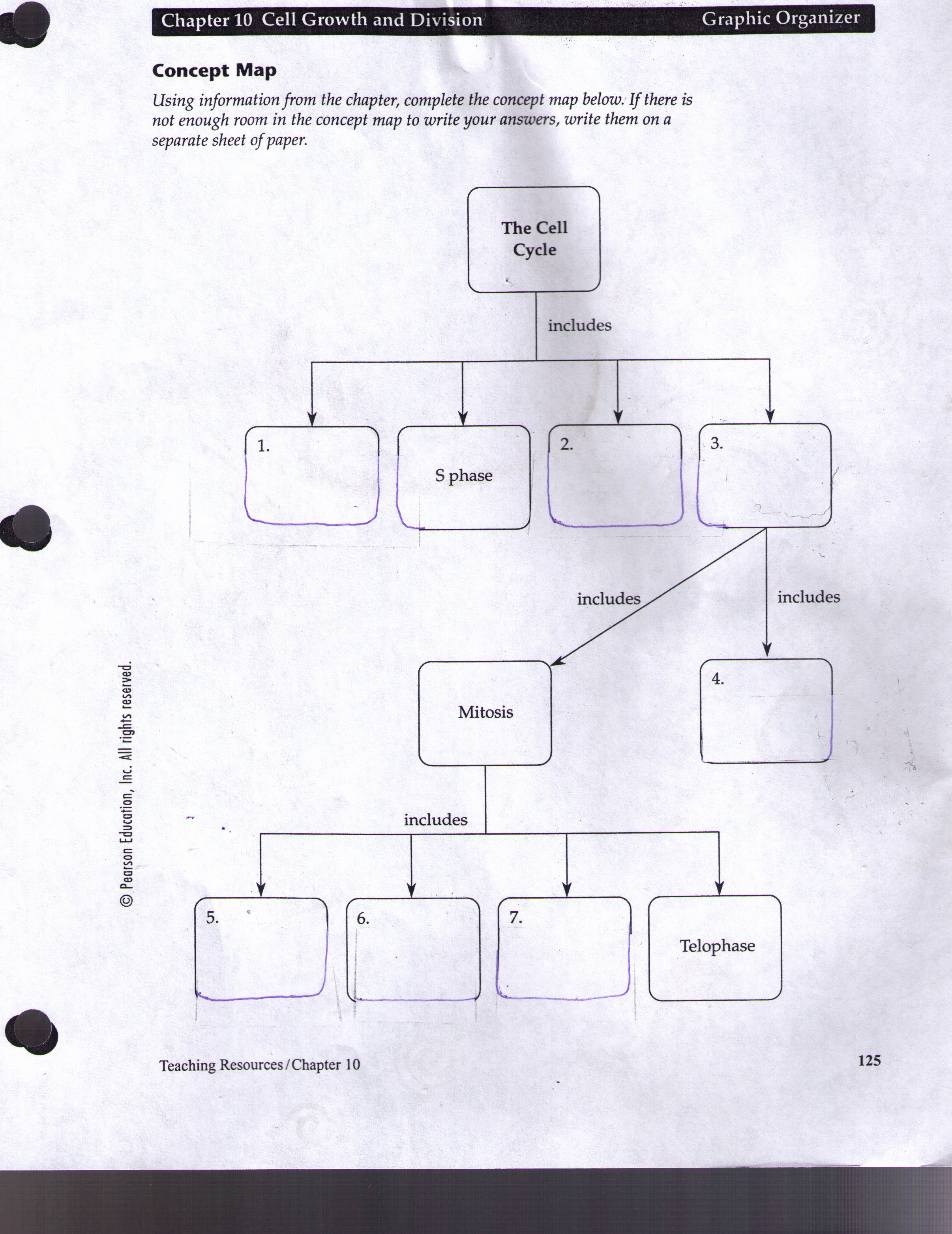 Cell Concept Map Worksheet Answers Lovely Worksheet Cell Growth and Division Worksheet Grass Fedjp