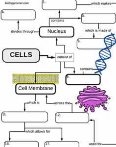 Cell Concept Map Worksheet Answers Luxury Cell Structures A Graphic organizer