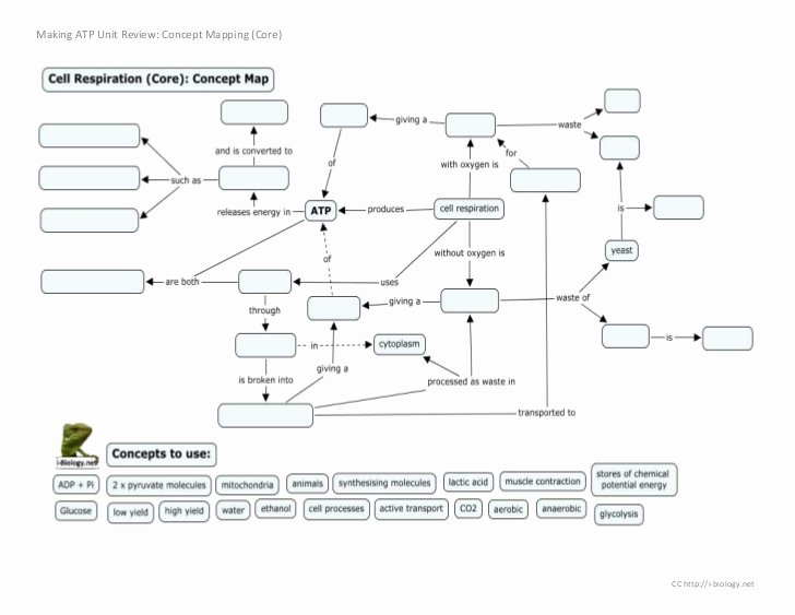 Cell Concept Map Worksheet Answers Luxury Making atp Concept Mapping Review