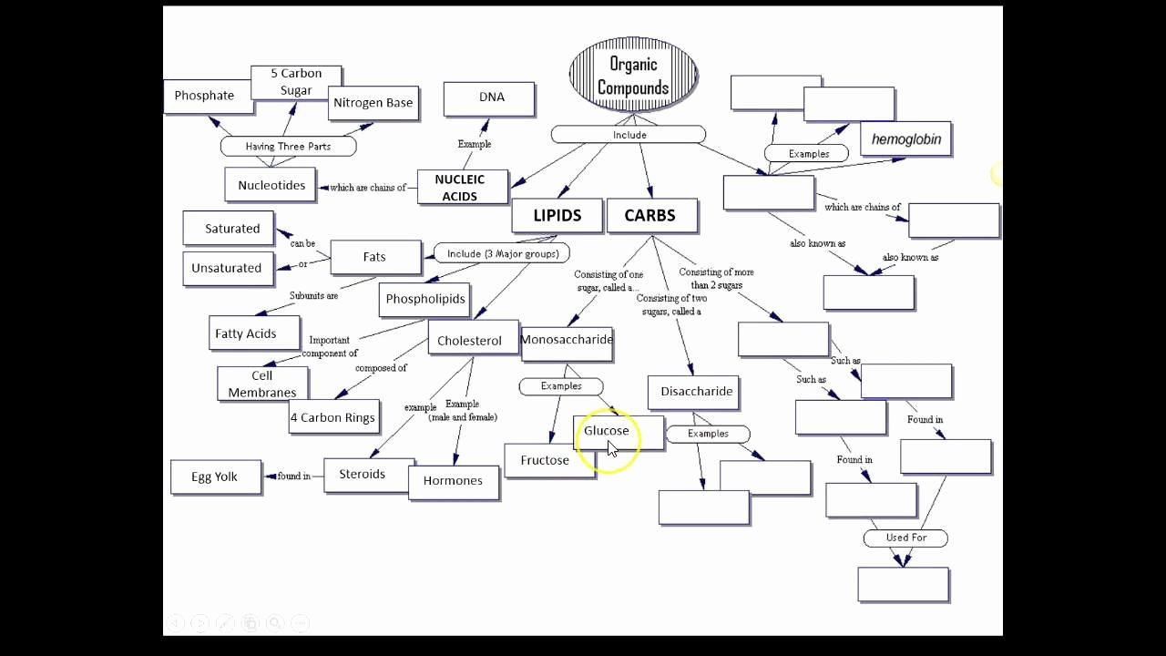 Cell Concept Map Worksheet Answers New Answers organic Molecules Concept Map