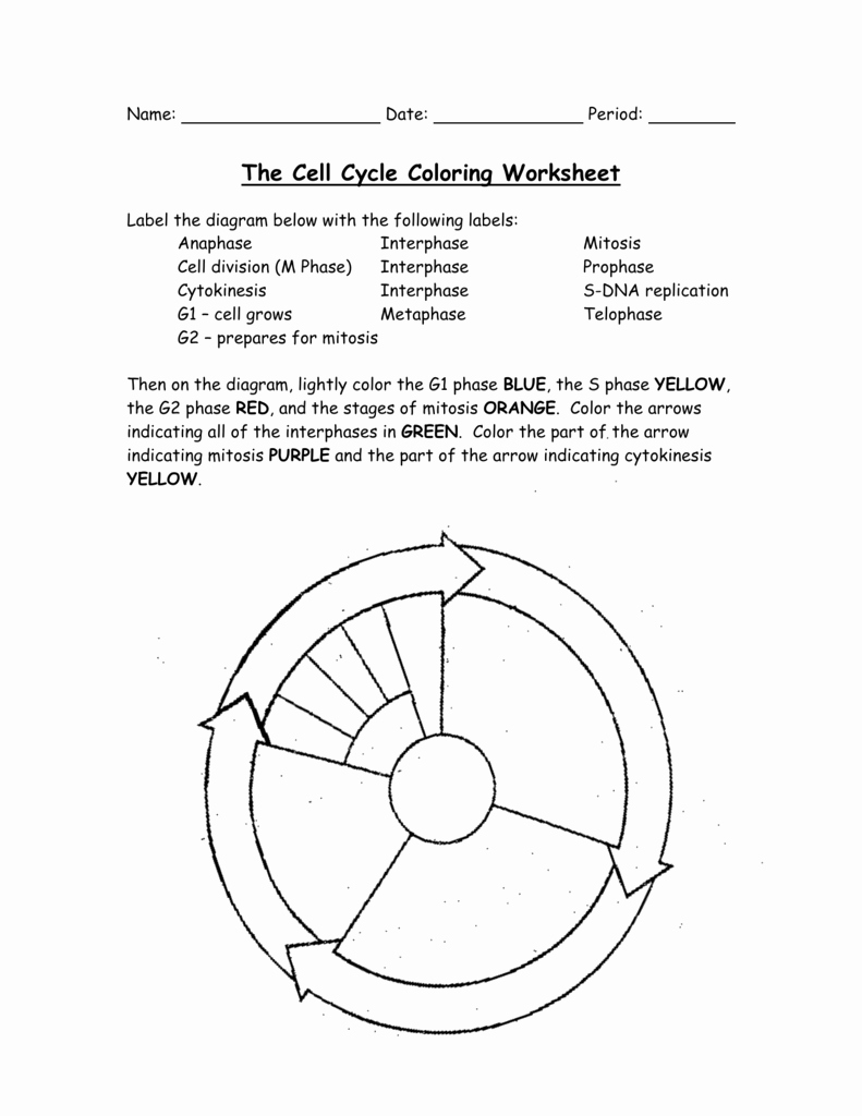 Cell Cycle and Mitosis Worksheet Beautiful the Cell Cycle Coloring Worksheet