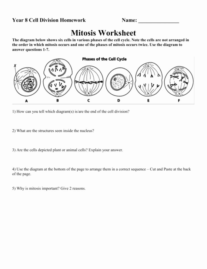 Cell Cycle and Mitosis Worksheet Unique Mitosis Versus Meiosis Worksheet Answers