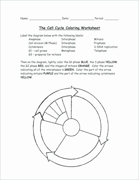 Cell Cycle Coloring Worksheet Elegant Cell Cycle Drawing Worksheet at Getdrawings