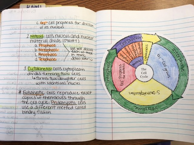 Cell Cycle Coloring Worksheet New Cell Cycle Coloring