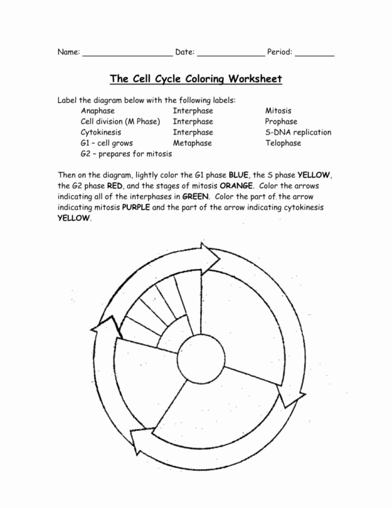 Cell Cycle Worksheet Answer Key Awesome top 10 Amazing the Cell Cycle Coloring Worksheet Answer