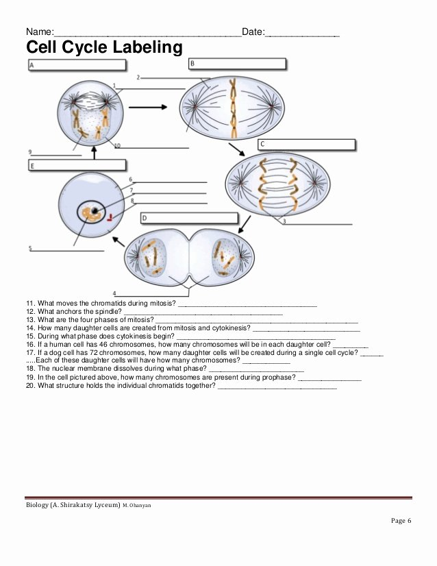 Cell Cycle Worksheet Answers Inspirational Cell Cycle Labeling Worksheet Answer Key the Best