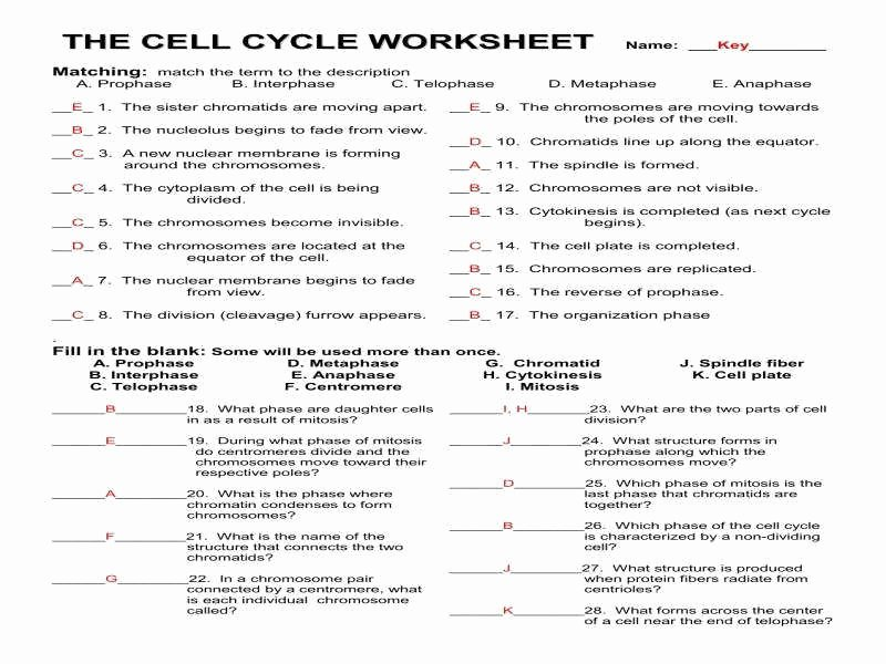 Cell Division Worksheet Answers Fresh Mitosis Worksheet Answers