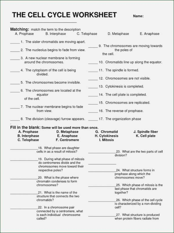 Cell Division Worksheet Answers Inspirational Phases the Cell Cycle Worksheet Answer Key