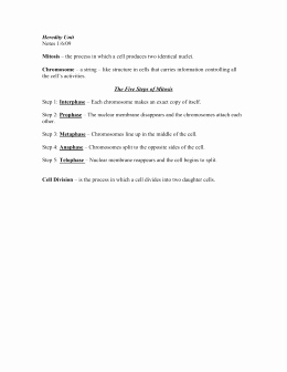Cell Division Worksheet Answers Lovely Cell Division Worksheet Answer Key