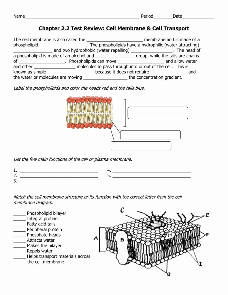 Cell Membrane and tonicity Worksheet Fresh Cell Membrane and tonicity Worksheet
