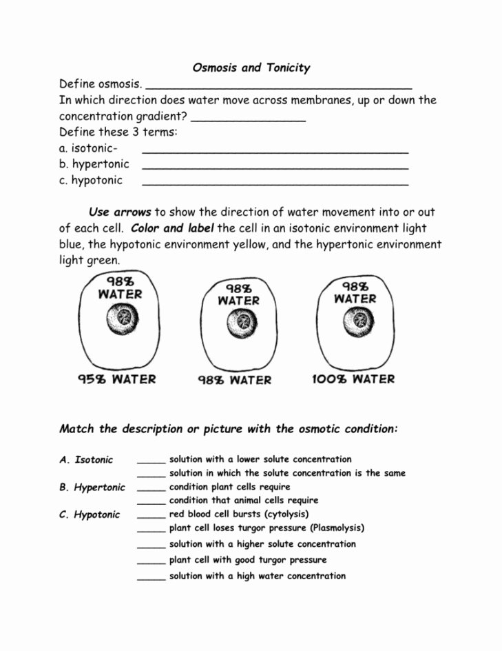 Cell Membrane and tonicity Worksheet Unique Diffusion Worksheet