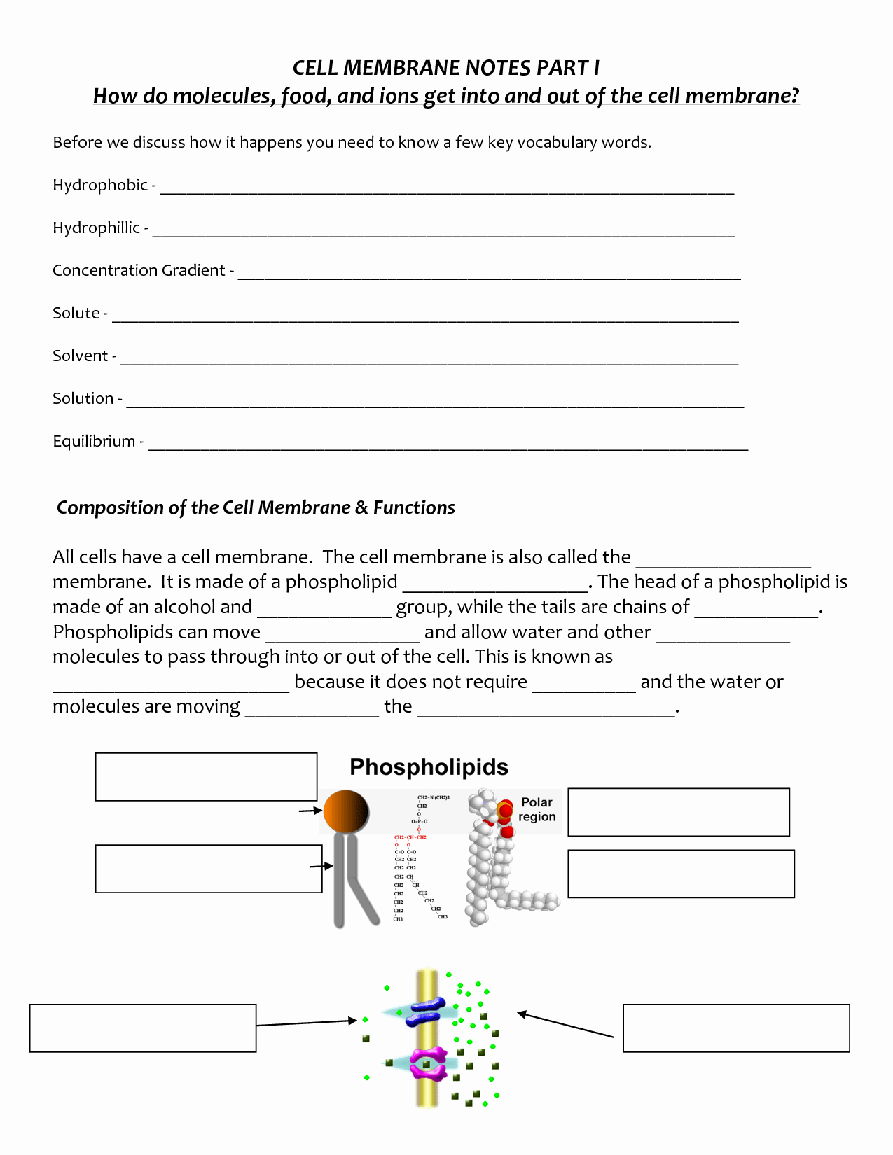Cell Membrane Coloring Worksheet Answers Inspirational Label Cell Membrane Diagram Worksheet