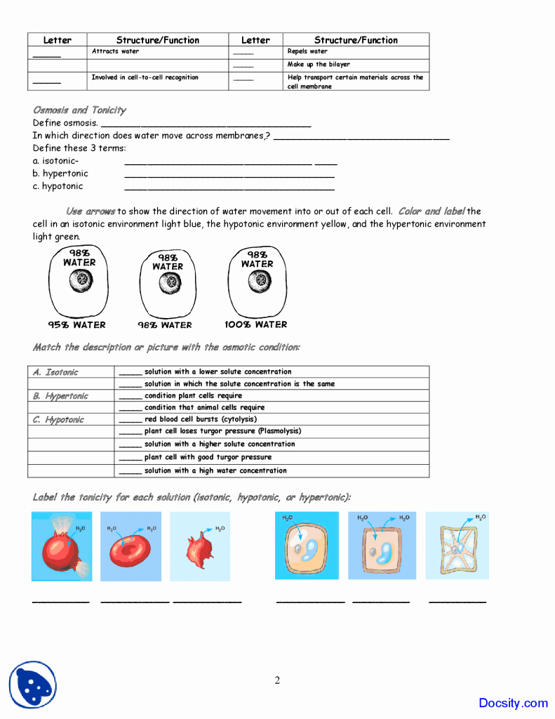 Cell Membrane Coloring Worksheet Answers Luxury Cell Membrane Worksheet Answers Coloring Application